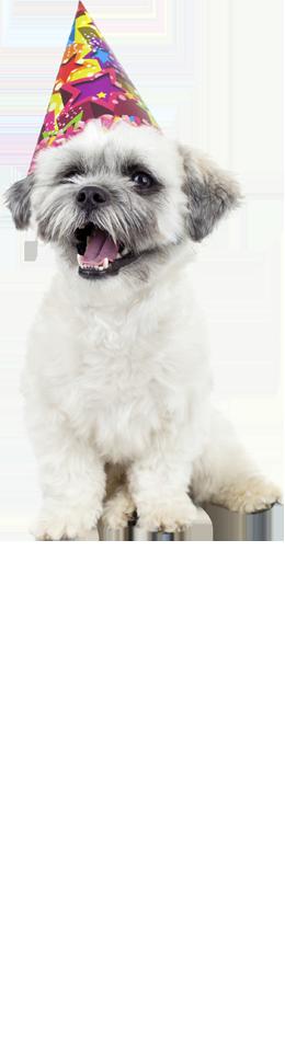 Merrimack Nh Dog Training
